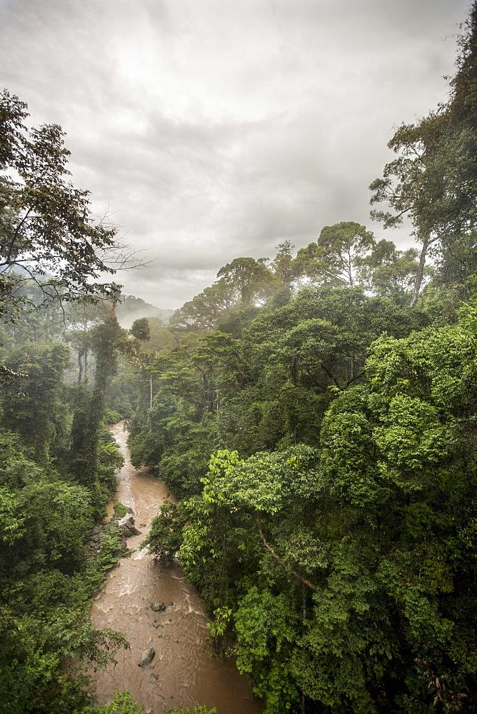 Danum Valley, Sabah, Malaysian Borneo, Malaysia, Southeast Asia, Asia  - 824-153
