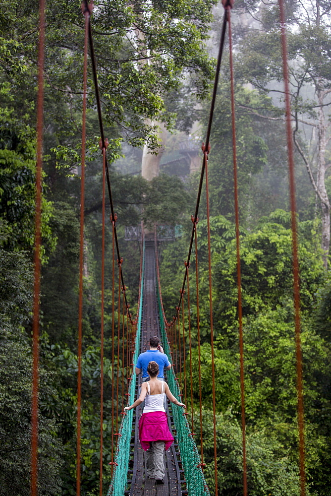 Tourists on the canopy walkway in Danum Valley, Sabah, Malaysian Borneo, Malaysia, Southeast Asia, Asia  - 824-160