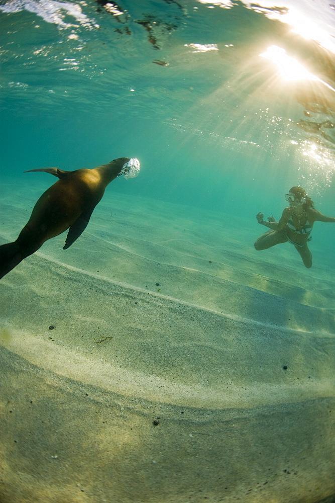 A freediver interacts with a sea lion, Galapagos Islands, Ecuador, South America