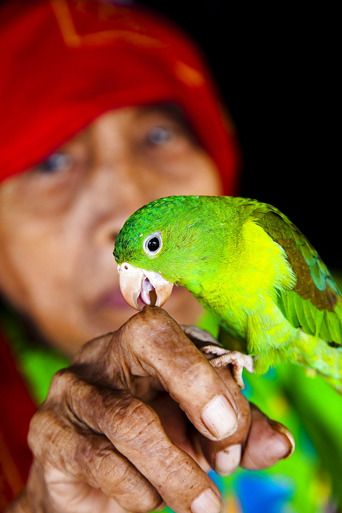 Kuna woman with pet parrot in the San Blas Islands, Panama, Central America - 825-13