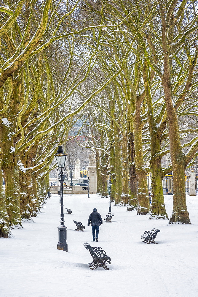 Green Park in the snow, London, England, United Kingdom, Europe - 828-1108
