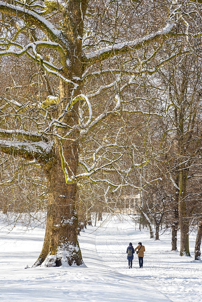 Green Park in the snow, London, England, United Kingdom, Europe - 828-1110