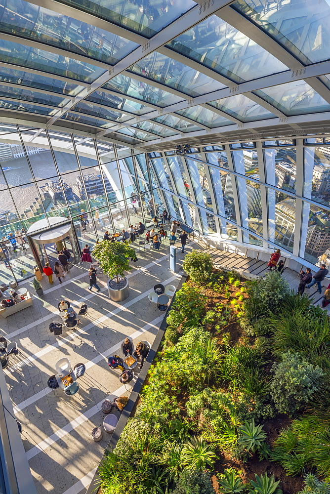 The Sky Garden at the Walkie Talkie (20 Fenchurch Street), City of London, London, England, United Kingdom, Europe - 828-1131
