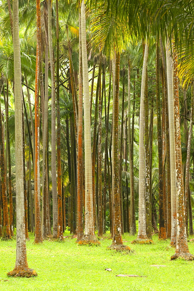 Forest at Anse des Cascades on the French island of Reunion in the Indian Ocean, Africa