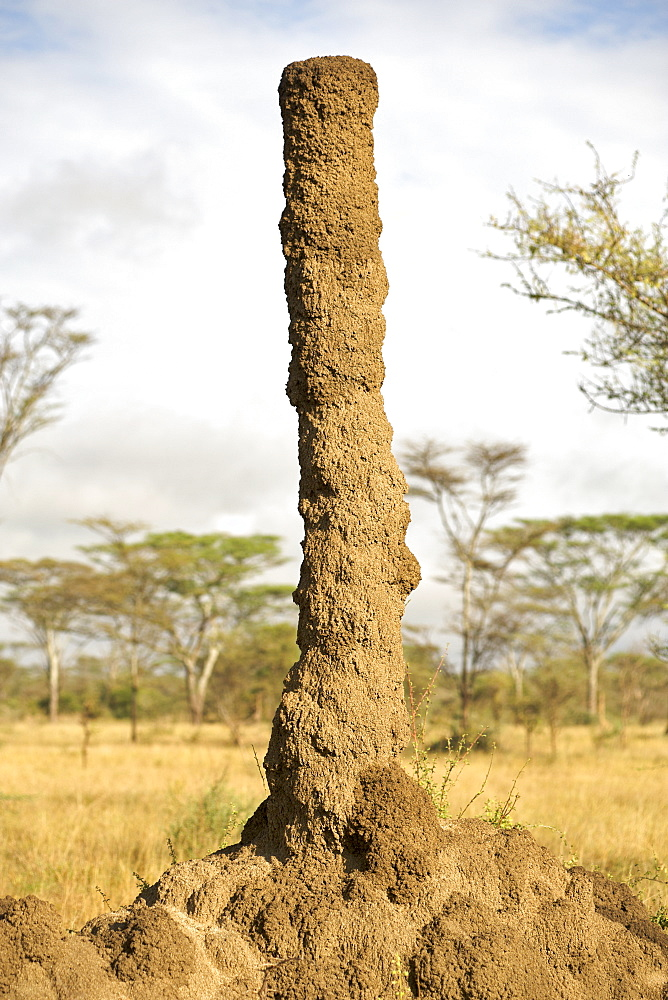 Anthill in Kidepo Valley National Park in northern Uganda.