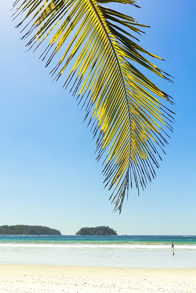 The white sand palm-fringed beach at this laid-back village & resort; Samara, Guanacaste Province, Nicoya Peninsula, Costa Rica, Central America - 83-12682
