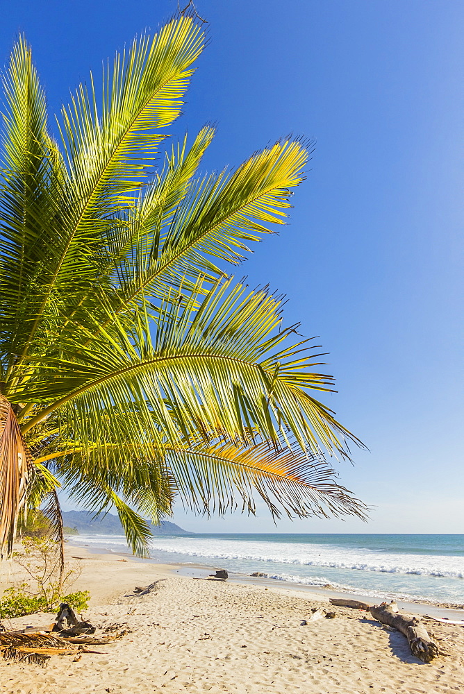Palm trees on this beautiful surf beach near Mal Pais, far south of Nicoya Peninsula, Santa Teresa, Puntarenas, Costa Rica, Central America