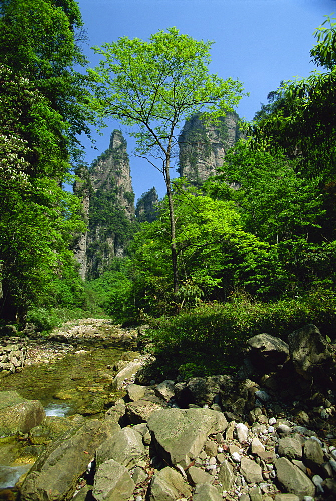 Limestones rock formations in forested valley, Hunan Province, China, Asia