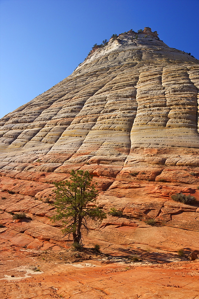 Checkerboard Mesa, formed of Navajo sandstone, Zion National Park, Utah, United States of America, North America