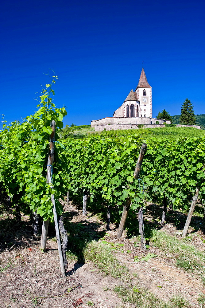 Fortified heritage church over vineyards in Hunawihr, Alsace, France, Europe