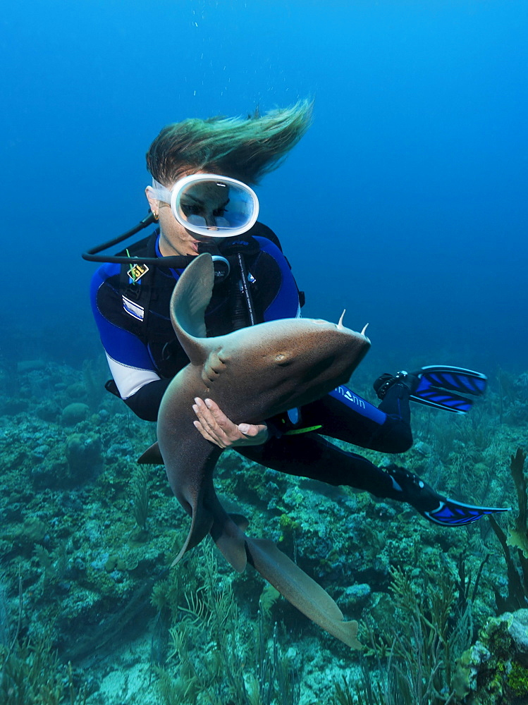 Female scuba diver holding a Caribbean Nurse Shark (Ginglymostoma cirratum), special contact on the sharks belly causes it to fall into a state of apathy, Barrier Reef, San Pedro, Ambergris Cay Island, Belize, Central America, Caribbean