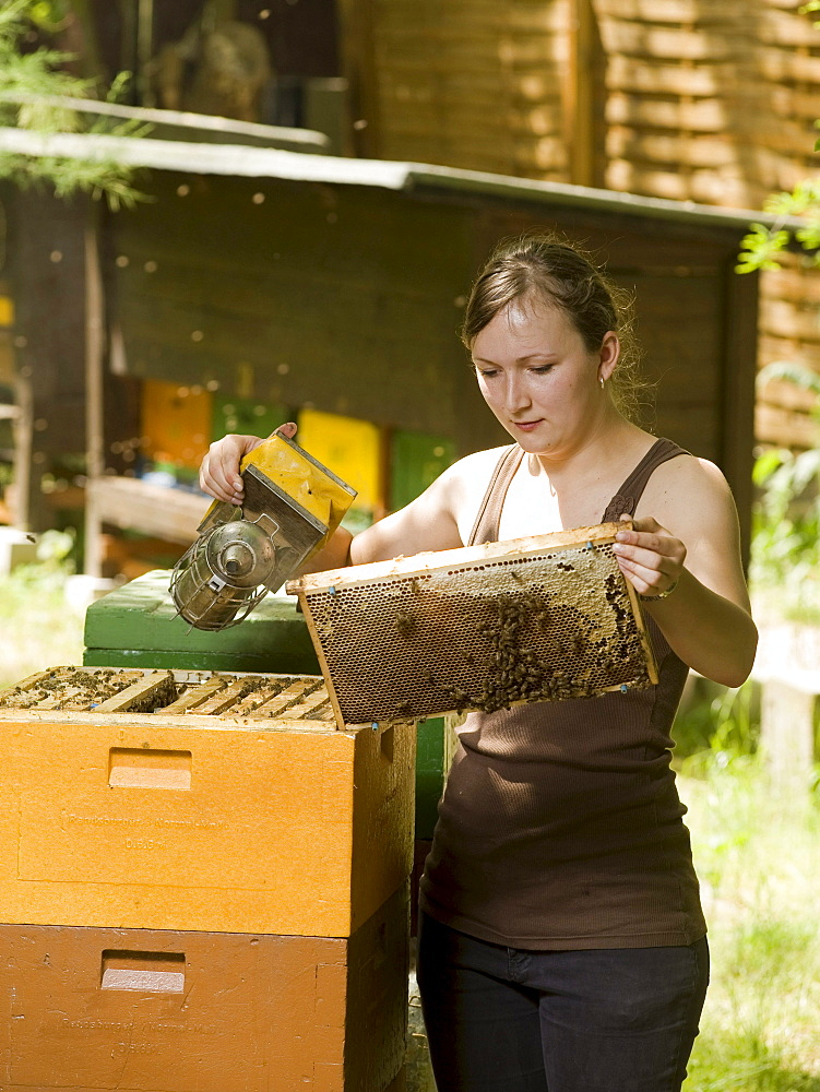 Female apprentice beekeeper and beehive, Berlin, Germany, Europe