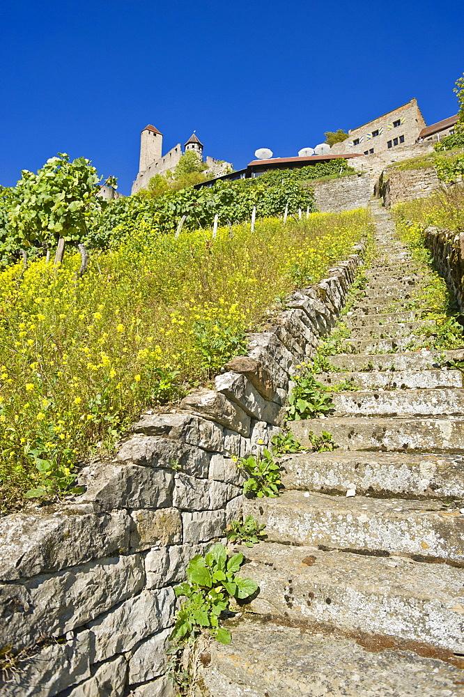 Burg Hornberg castle, Neckarzimmern, Neckartal, Baden-Wuerttemberg, Germany, Europe