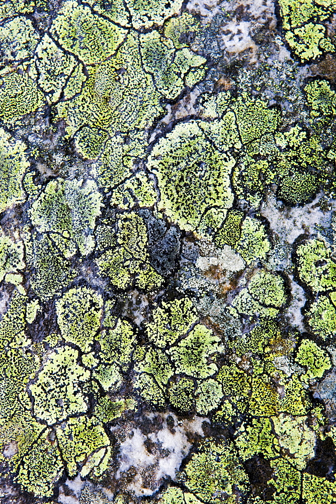 Map lichen on a stone, Norway, Scandinavia, Europe