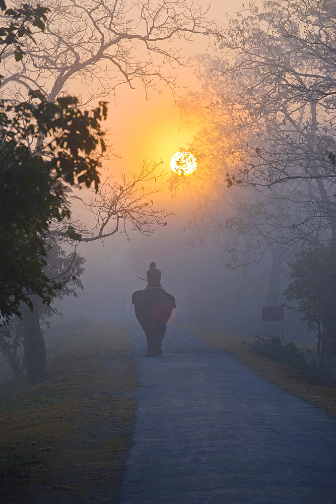 Elephant and rider in the mist under the rising sun, UNESCO World Natural Heritage Site of Kaziranga National Park, Assam, North East India, India, Asia
