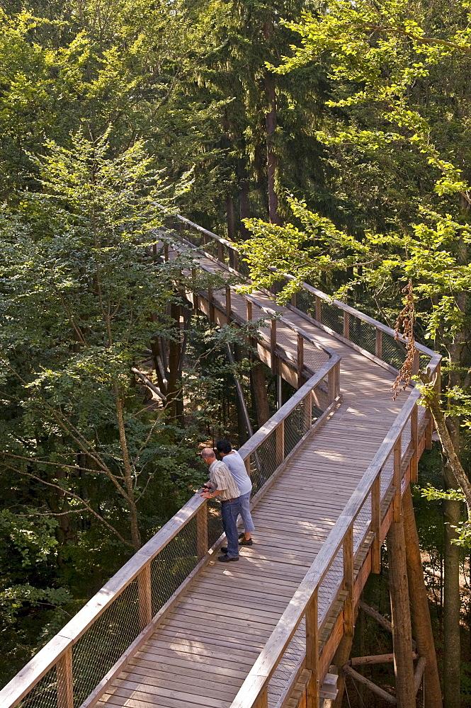 World's longest tree top walk, view from the 44 metre high tree platform, Neuschoenau, Bavarian Forest National Park, Bavaria, Germany, Europe