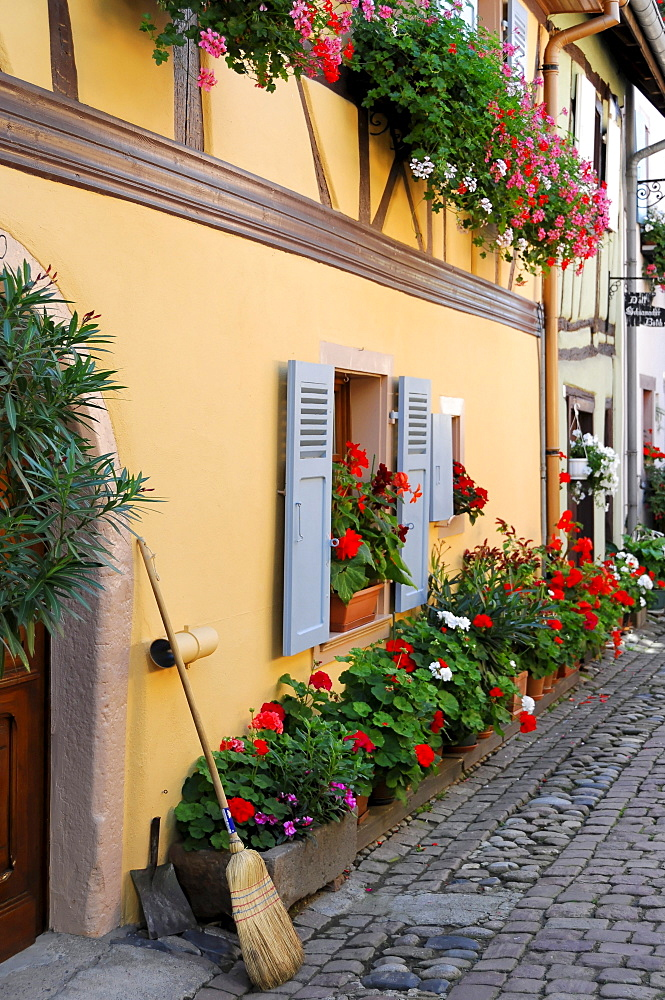 Half-timbered house and flowers, Eguisheim, Alsace, France, Europe