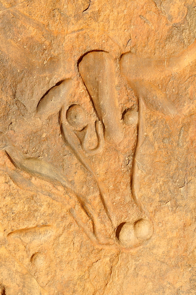 Rock engraving of a crying cow, neolithic rock art near Djanet, Tassili n'Ajjer National Park, Unesco World Heritage Site, Wilaya Illizi, Algeria, Sahara, North Africa, Africa