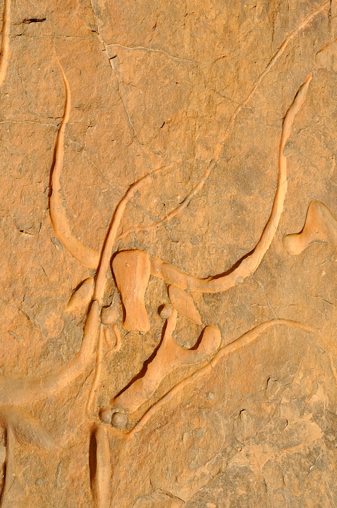 Rock engraving of a crying cow, neolithic rockart near Djanet, Tassili n'Ajjer National Park, Unesco World Heritage Site, Wilaya Illizi, Algeria, Sahara, North Africa, Africa