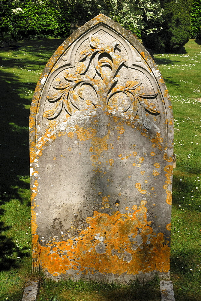 Old grave stone with a relief of the tree of life, cemetery of the Church of St. John the Baptist, Bere Regis, Dorset, southern England, England, United Kingdom, Europe