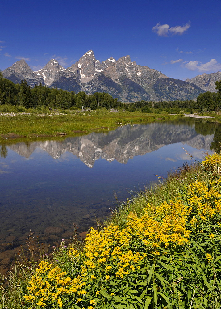 Snake River, Schwabacher Landing, in front of the Teton Range, Grand Teton National Park, Wyoming, United States of America, USA