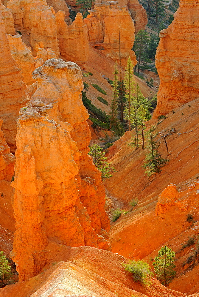 Rock formations and hoodoos in the morning, Sunrise Point, Bryce Canyon National Park, Utah, United States, America