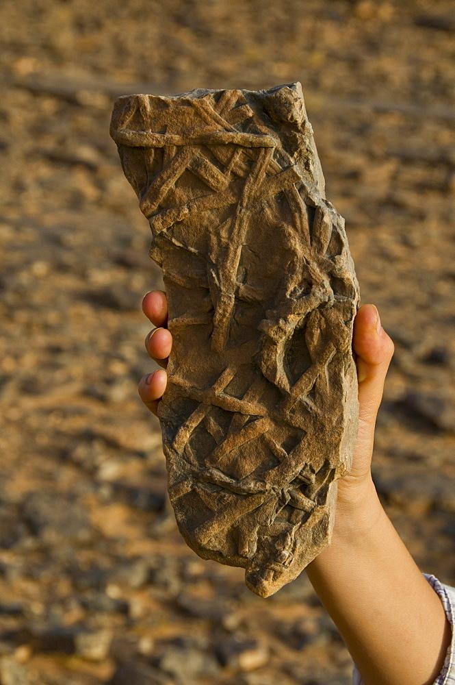 Fossilized plants, Tasset, Algeria, Africa