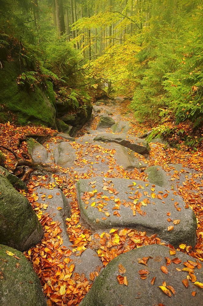 Wilde Hoelle trail in autumn in the Saechsische Schweiz, Saxon Switzerland, Elbe Sandstone Mountains, Saxony, Germany, Europe