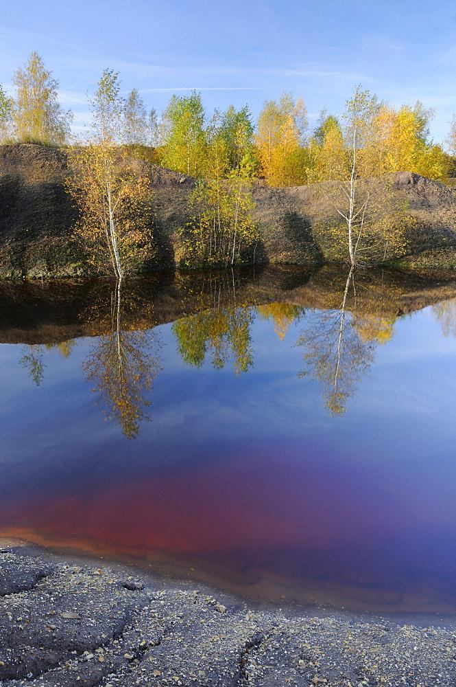 Birch trees (Betula) in a surface mine near Leipzig, Saxony, Germany, Europe