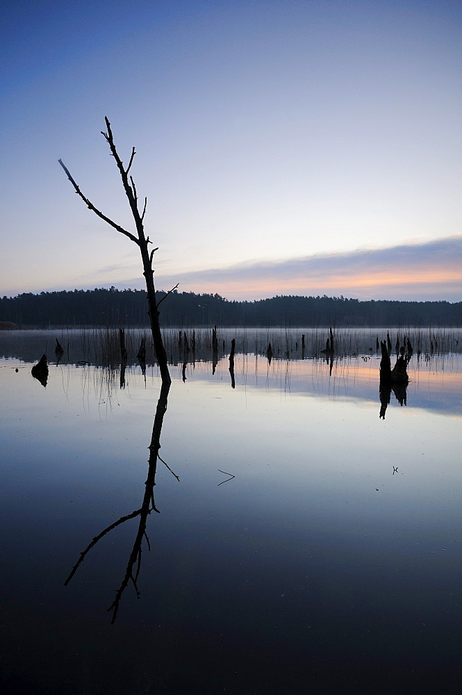 Sunrise on a lake in the Mueritz National Park, Mecklenburg-Western Pomerania, Germany, Europe