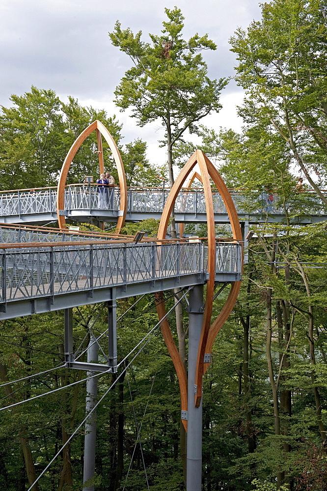 Tree-top Walk, Kellerwald National Park forest, Edersee, North Hesse, Germany, Europe
