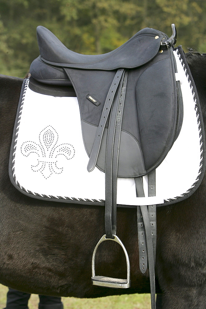 Saddle with saddle blanket on a dressage horse