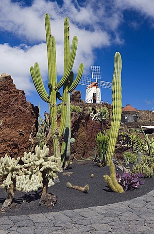 Wind mill in the cactus garden, Jardin de Cactus, built by the artist Cesar Manrique, Guatiza, Lanzarote, Canary Islands, Spain, Europe