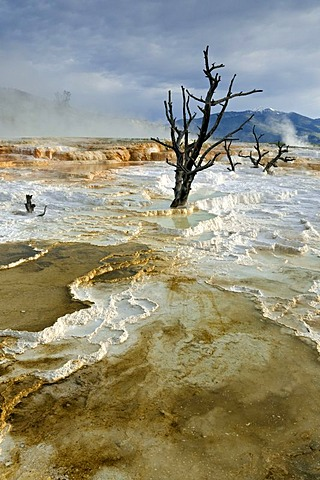 Limestone terraces of Mammoth Hot Springs, Yellowstone National Park, Wyoming, USA, North America