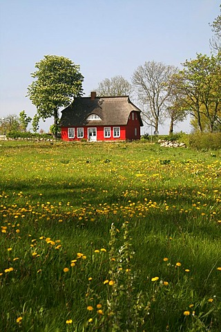 Red thatched house on a spring meadow, Cape Arkona, Ruegen, Germany, Europe