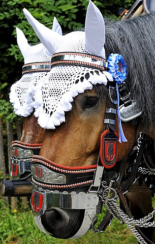 Festively decorated horse of the Spatenbrauerei brewery, parade in traditional costume at the Loisachgaufest festival in Neufahrn, Upper Bavaria, Bavaria, Germany, Europe