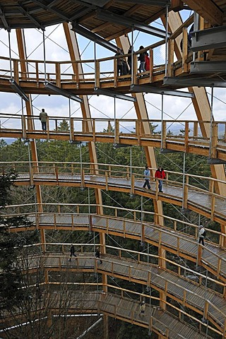 View into the tree tower of the tree top path in the Nationalpark Bayrischer Wald National Park Bavarian Forest, Bavaria, Germany, Europe