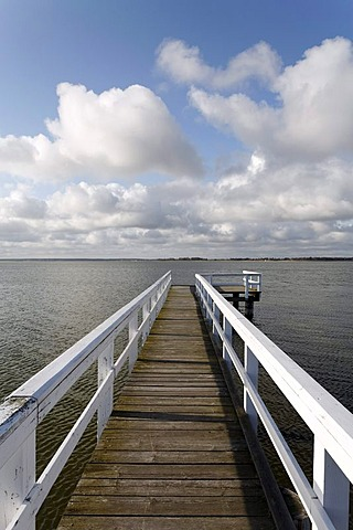 Wooden jetty with white railings jutting into a lake, bodden landscape near Wiek am Darss, Fischland-Darss-Zingst, Mecklenburg-Western Pomerania, Germany, Europe