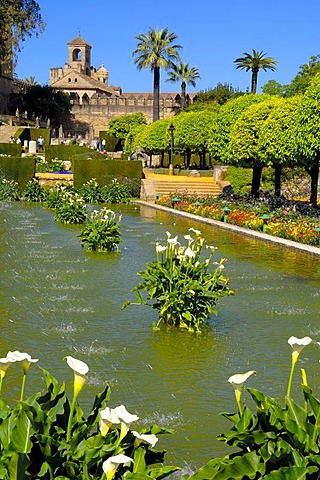 The gardens of Alcazar de los Reyes Cristianos, Alcazar of Catholic Kings, Cordoba, Andalusia, Spain, Europe