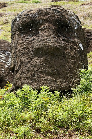 Moai, stone sculpture, head in the grass, Easter Island, Chile