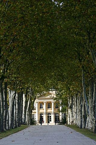 Chateau Margaux entrance, Sycamore trees, famous vineyard, Medoc, Bordeaux, Aquitaine, France, Europe