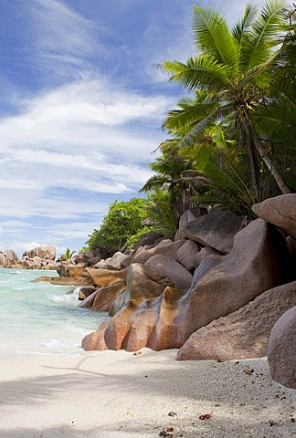 Coconut Palms (Cocos nucifera) and granite rocks on Anse Coco Beach, La Digue Island, Seychelles, Africa, Indian Ocean