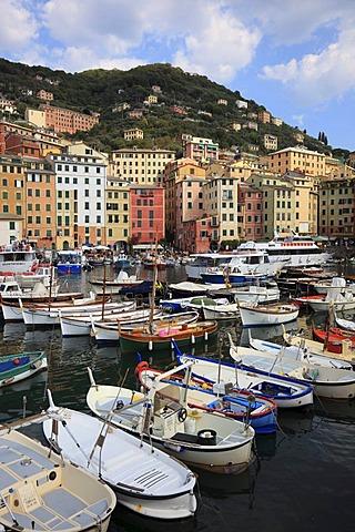 Camogli in the Genoa province, on the Golfo Paradiso at the Riviera di Levante, fishing port, Liguria, Italy, Europe