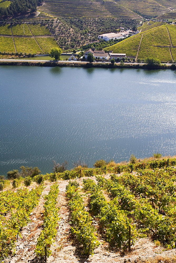 Douro river and vineyards, Portugal, Europe