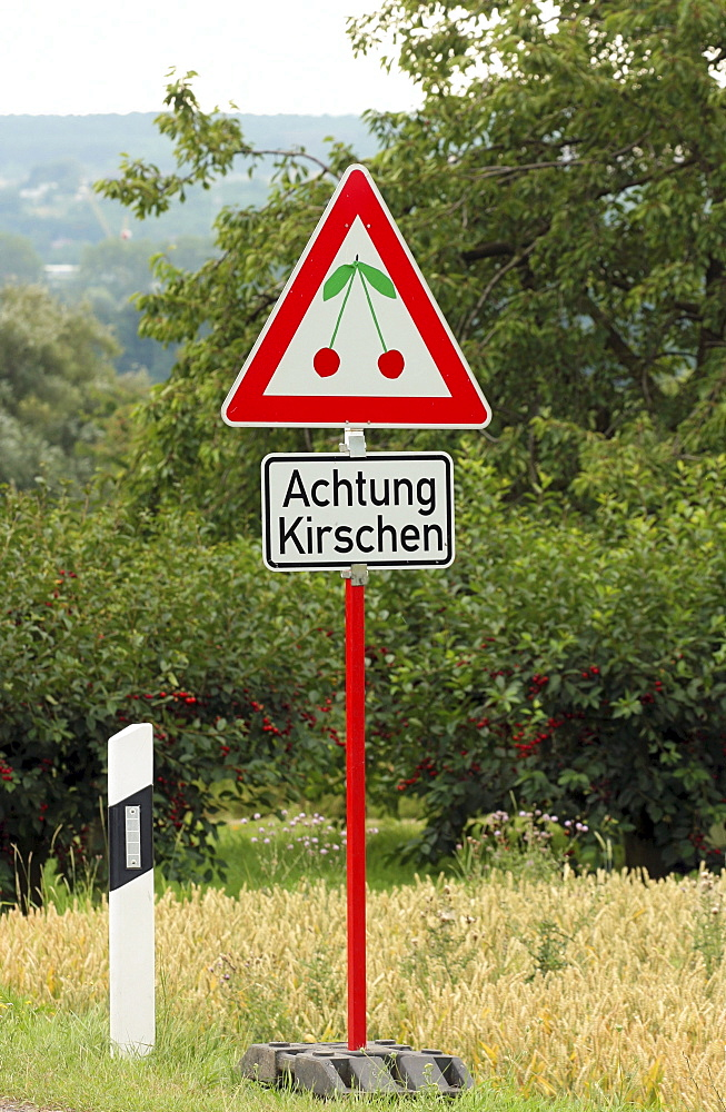 Funny advertising sign in the style of a traffic sign on the roadside, cherries ahead, cherry-growing area of Frauenstein, state capital of Wiesbaden, Hesse, Germany, Europe