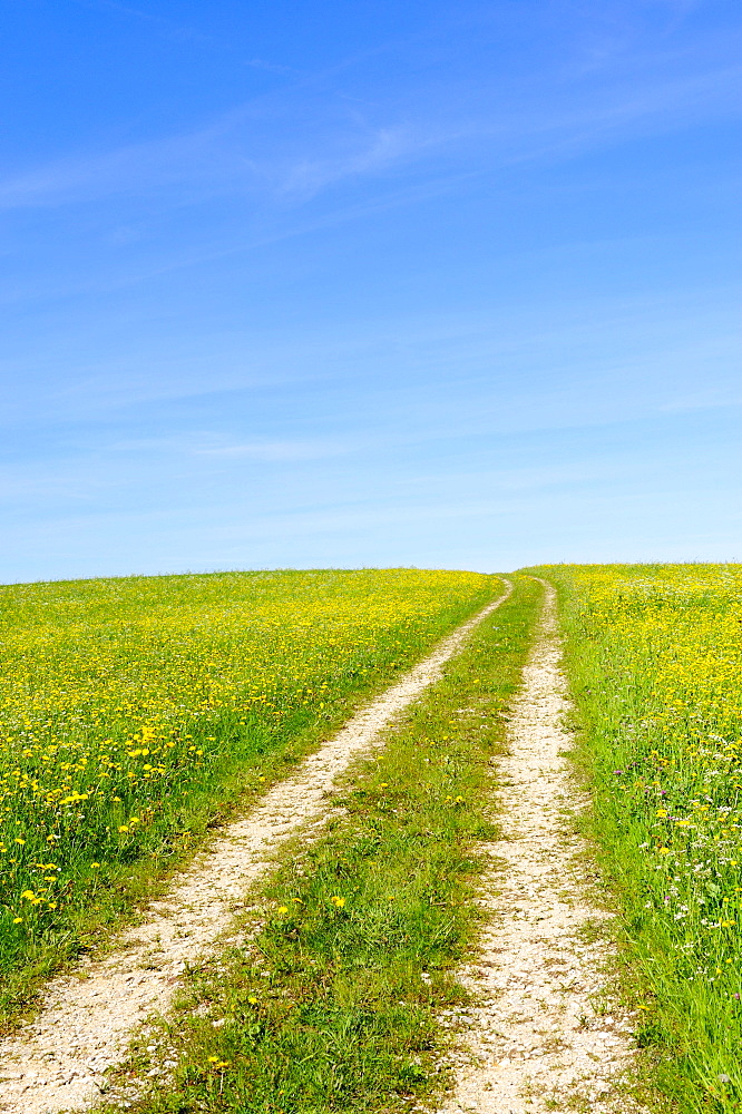 Dirt track through a spring meadow, Swabian Mountains, Baden-Wuerttemberg, Germany, Europe