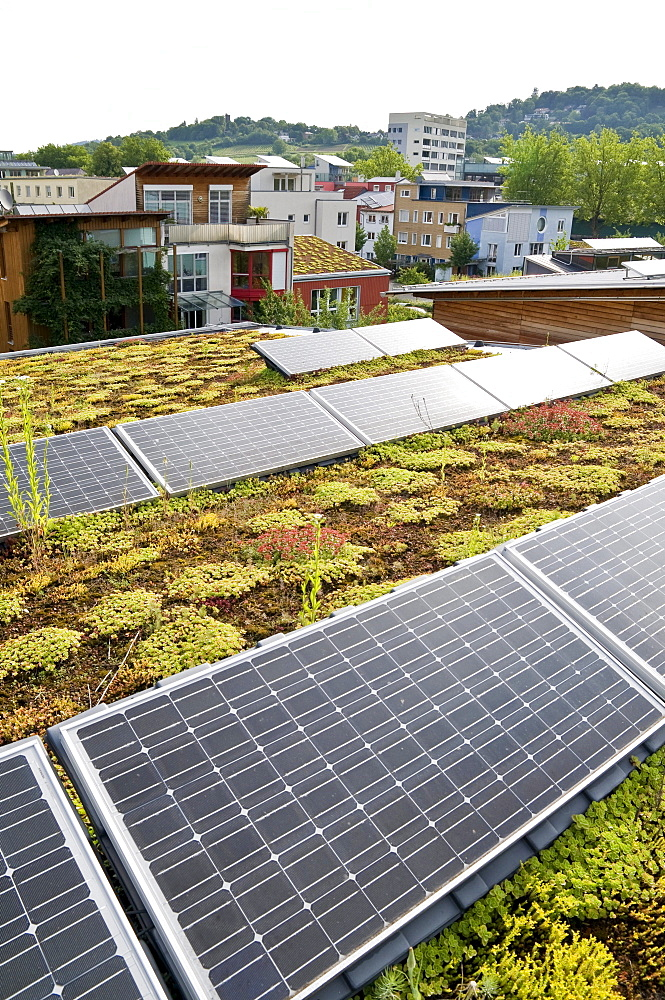 Planted roof and solar system, Vauban, Freiburg, Baden-Wuerttemberg, Germany, Europe