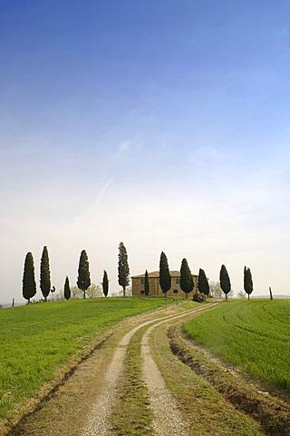 Farm near Pienza, row of cypress trees, Tuscany, Italy, Europe
