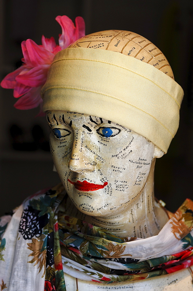 Study bust for the basic truths of life as a decoration for a hat shop, Erlangen, Middle Franconia, Bavaria, Germany, Europe