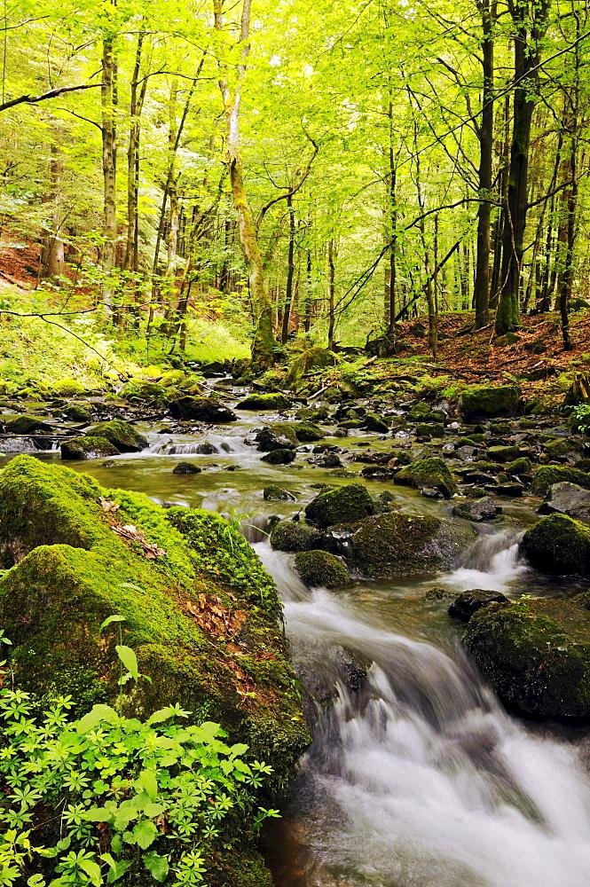 Primeval forest in the Vessertal valley, Biosphaerenreservat Vessertal-Thueringer Wald, biosphere reserve Vesser valley-Thuringian Forest, Thuringia, Germany, Europe